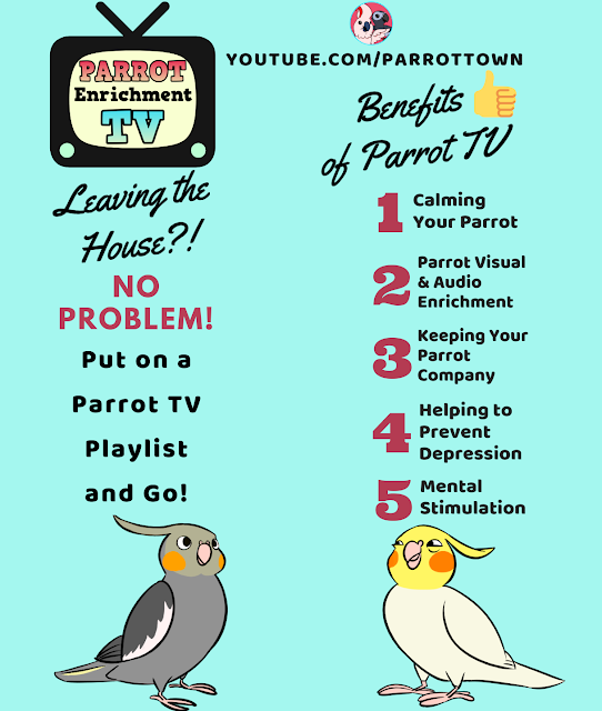 TV for Birds, Parrot Enrichment, Music to Calm your parrot, music for parrots, music for birds