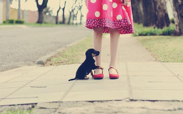 Jong hondje bij de benen van een vrouw