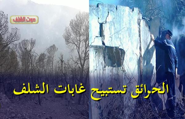 الحرائق تستبيح غابات الشلف .. والحماية تسجل حالة إختناق وتواصل تدخلاتها