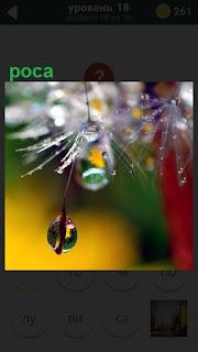 Капля росы капает с растения в свете солнечных лучей