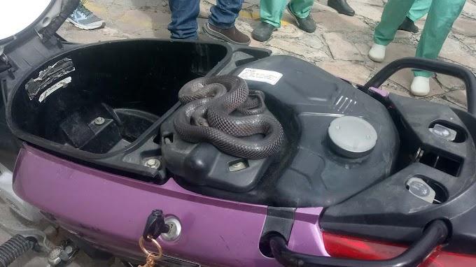 Cobra se esconde em moto e mobiliza Meio Ambiente na captura em Jacobina