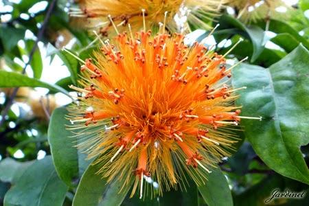 Flores para beija-flores