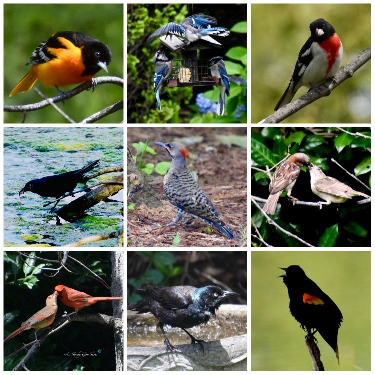 Backyard Birding: Hummingbird   _ Ms. Toody Goo Shoes