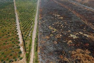 Miris! Area Kebakaran Hutan Indonesia Lebih Besar dari Luas Negara Belanda