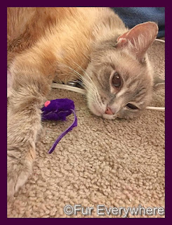 Lita hangs out on the floor with one of her toy mice.