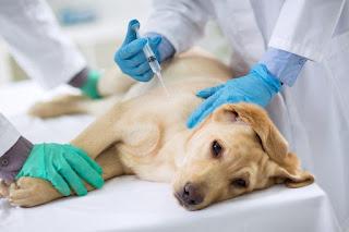 Pets: Distrito Federal ganha seu primeiro Hospital Veterinário Público
