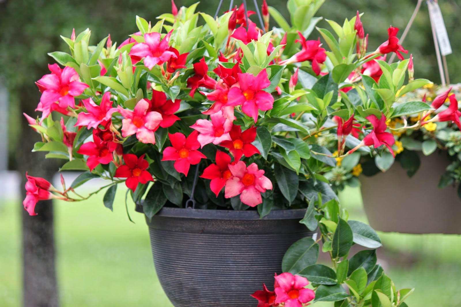 Savannah S Secret Gardens Summer Has Arrived With