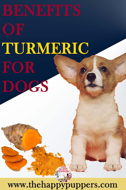 Benefits of turmeric in dogs