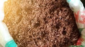 Pemeraman jamur tiram