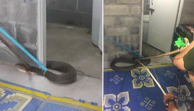Ular king kobra di kamar mandi