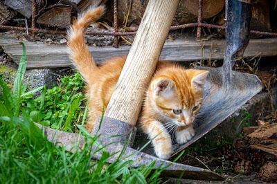Kedi Fotoğrafı