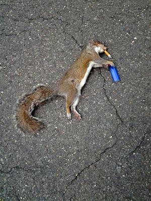 Lustige tote Tiere - Bilder vom Rauchen