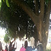 Man Commits Suicide In Awka, Hangs On A Mango Tree - Very Graphic Photos