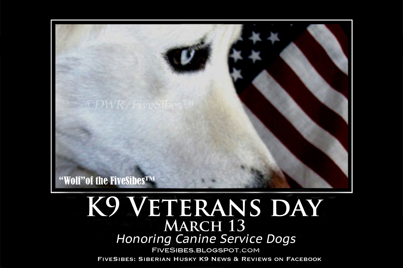 Memorial Day Images With Service Dogs