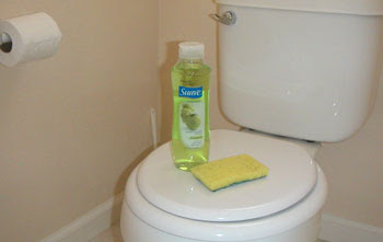 Remove All Stains Com How To Remove Urine Stains From