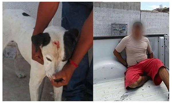 Arrestan a un sujeto por golpear a su perro con un martillo