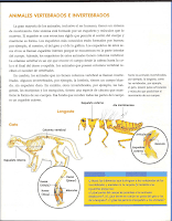 anexo vertebrados invertebrados