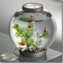 akuarium kecil untuk di kamar