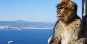 Los famosos monos de Gibraltar