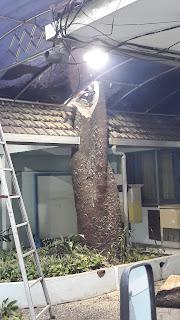 Potong pohon Surabaya di daerah Jl. walikota Mustajab