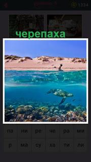 655 слов черепаха под водой в свободном плавании 9 уровень