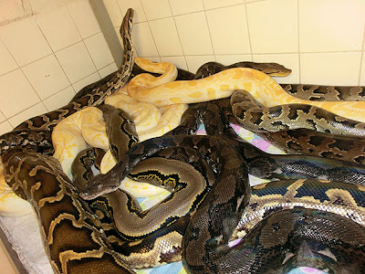 Man Found Dead In House Full Of Snakes