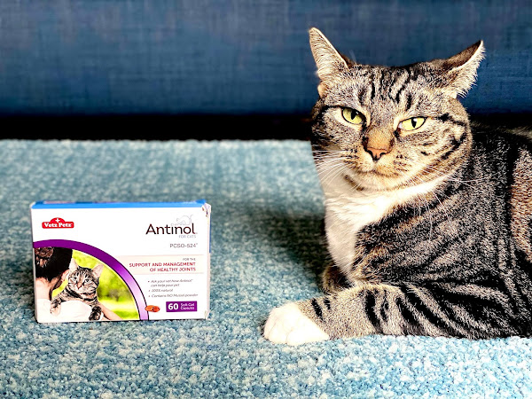 Supporting Joint Health & Mobility in Cats with Antinol