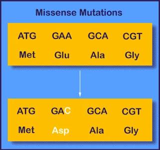 Missense mutation