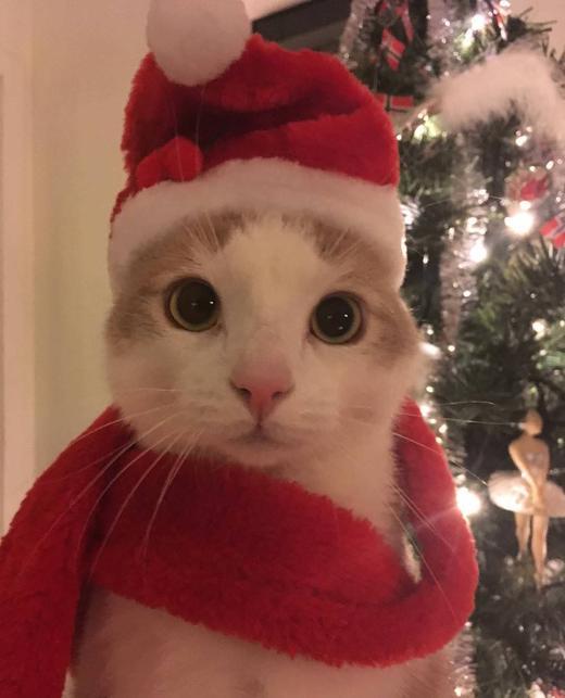 кот в костюме деда мороза
