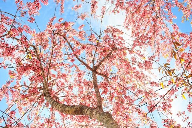 Chiêm ngưỡng vẻ đẹp tuyệt trần của vùng ngoại ô Đà Lạt 3