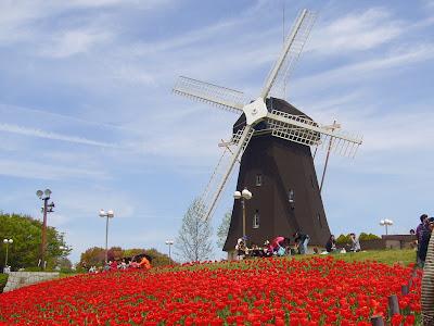 花博記念公園鶴見緑地の風車と赤いチューリップ