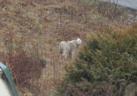 More reports of big cats in KY