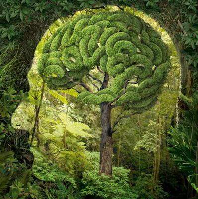 Neuro-Arboriculture: Brain on Trees.