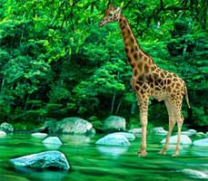 Juegos de Escape - Giraffe Lake Forest Escape