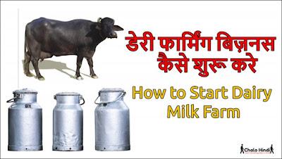 Dairy Farming Business Plan in Hindi