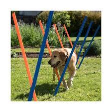 cães com problema de coluna