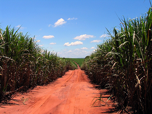 Sugarcane plantation in Brazil