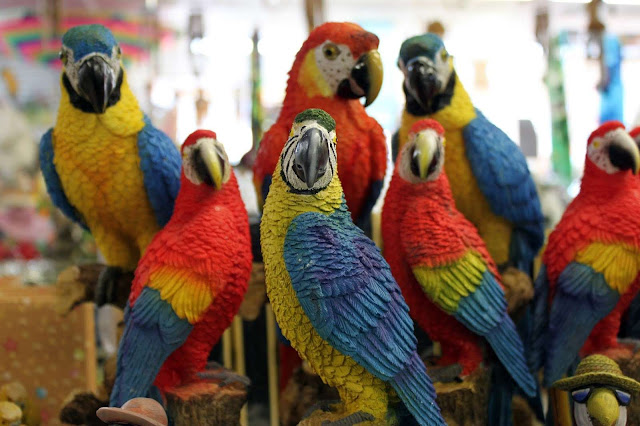 The Famous and Favorite Parrots