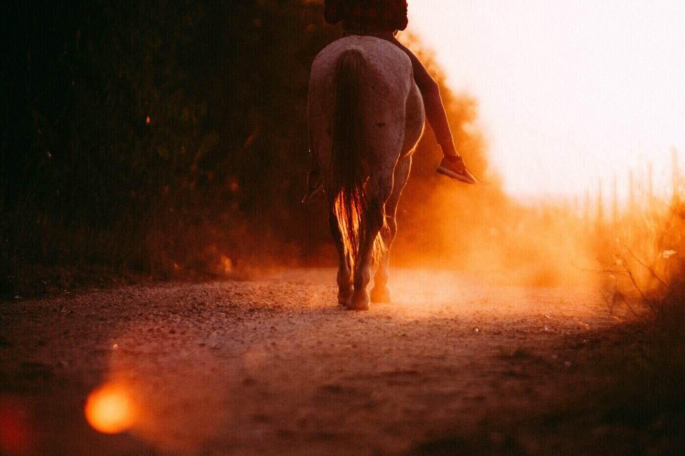 person riding horse at sunset - horses for sale - 7 tips for first-time buyers