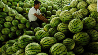 A map in a white shirt sitting amongst piles of watermelons.