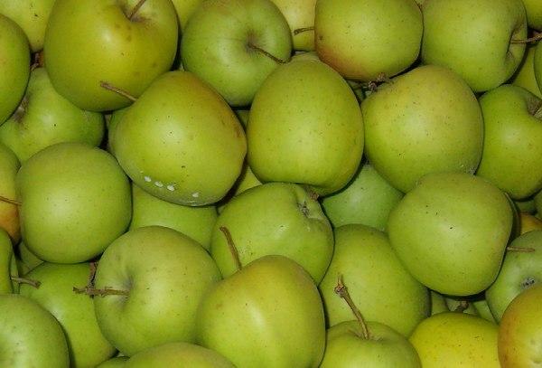 Cuando astringente manzana es