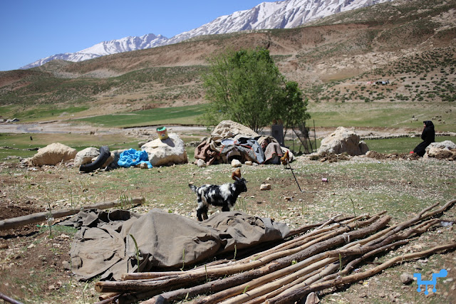 Bakhtiari nomads | Iran