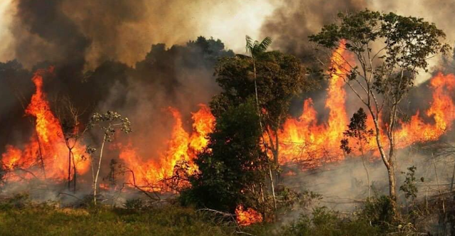 Amazon fires: Amazon rainforest is burning at a record rate – space agency