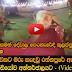 Rathnapura saman dewalaya Elephant