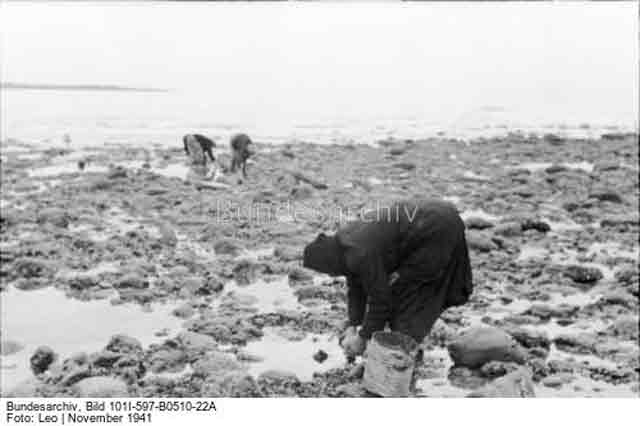 French women collecting shellfish on the seashore, 30 November 1941 worldwartwo.filminspector.com