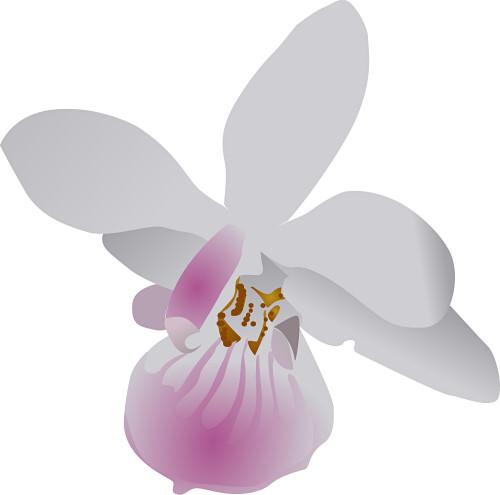 Orchid Clipart 042111» Vector Clip Art - Free Clip Art Images