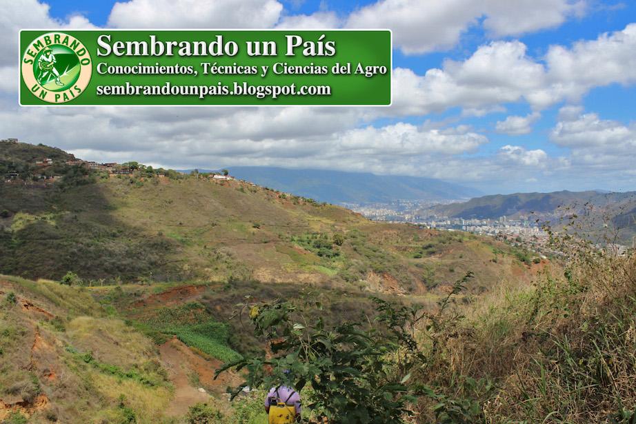 agricultura urbana en Caracas Venezuela