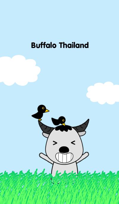 Buffalo Thailand
