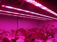 7 Kegunaan Lampu LED Untuk Tanaman Indoor, Berikut Ulasanya