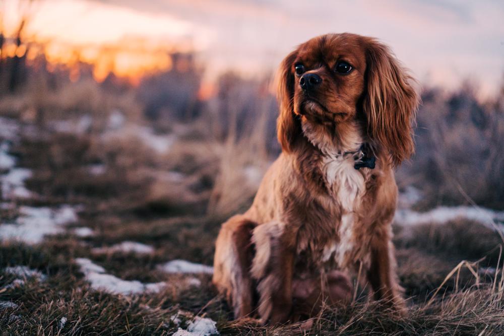old dog winter tips aching joints arthritis newstead brisbane vet